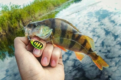 Весенняя рыбалка на окуня с вертушкой