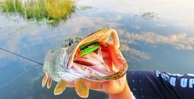 Рыбалка на щуку с поппером. Основы