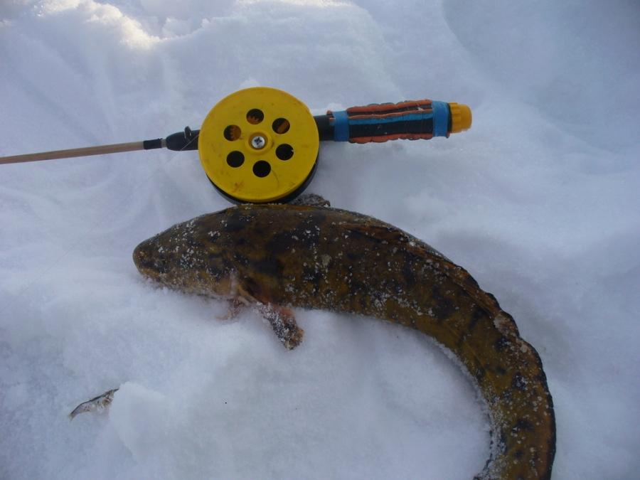 праздники были снасти для ловли налима зимой фото отдалять